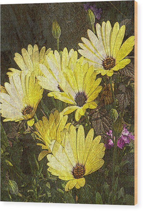 Digital Art Wood Print featuring the digital art Daisy Daisy by Tom Romeo