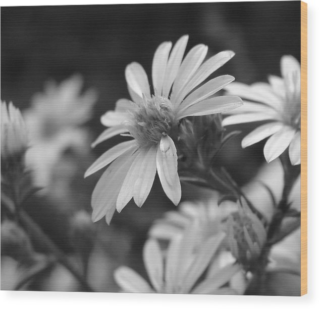 Wood Print featuring the photograph Just Black And White by Luciana Seymour