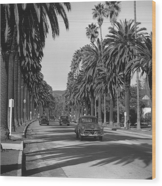 Shadow Wood Print featuring the photograph Cannon Drive by Slim Aarons