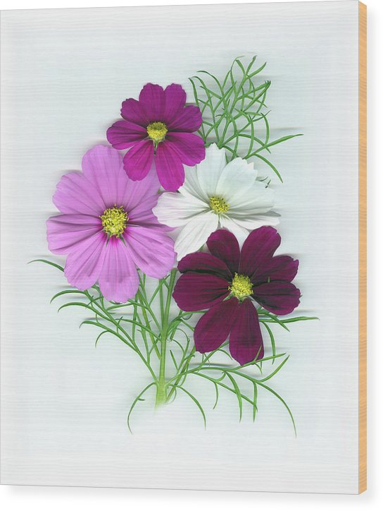 Cosmos Wood Print featuring the mixed media Cosmos Bouquet by Sandi F Hutchins