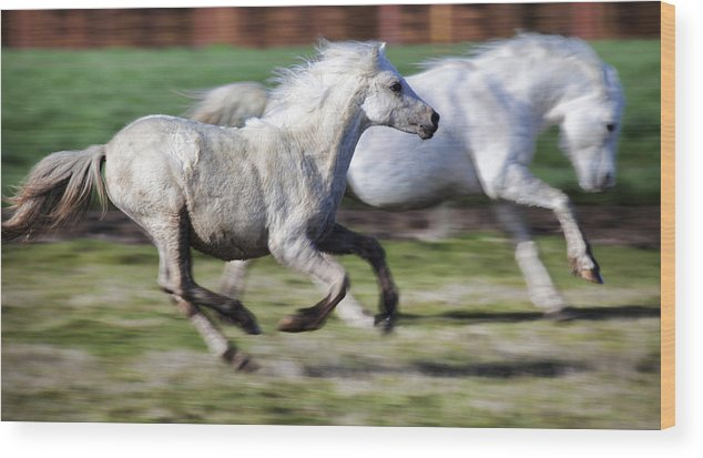 Horse Wood Print featuring the photograph Family by Karen Ulvestad
