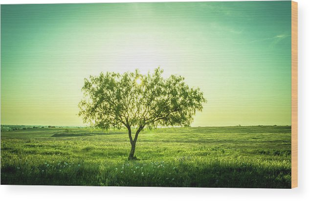 Smoke Wood Print featuring the photograph Lone Mesquite by Peyton Vaughn