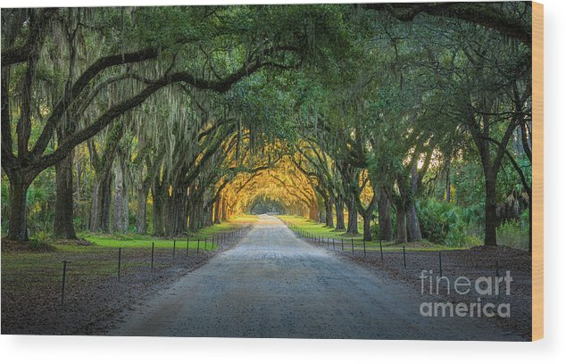 America Wood Print featuring the photograph Wormsloe Road by Inge Johnsson