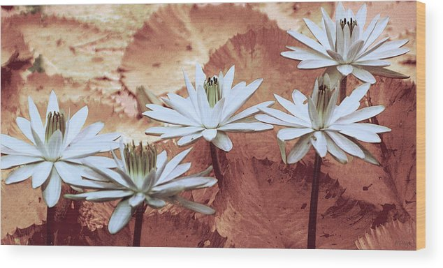 Flowers Wood Print featuring the photograph Greeting the Day by Holly Kempe