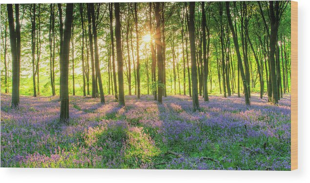 Tranquility Wood Print featuring the photograph English Bluebells by Tu Xa Ha Noi