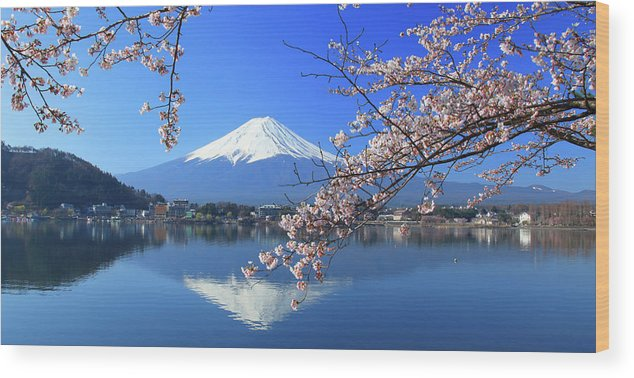 Tranquility Wood Print featuring the photograph Mount Fuji And Sakura by Photo By Prasit Chansareekorn