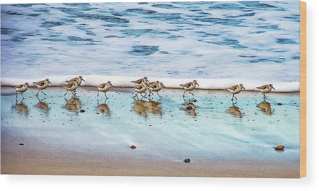 Animal Themes Wood Print featuring the photograph Shorebirds by Vanessa Mccauley