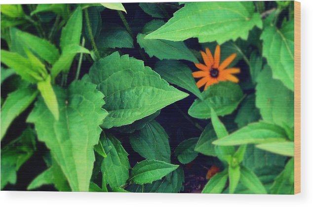 Flower Wood Print featuring the photograph First flower by Joseph Ferguson