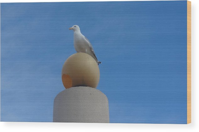 Seagull Wood Print featuring the photograph On Top of the World by Jessica Cruz