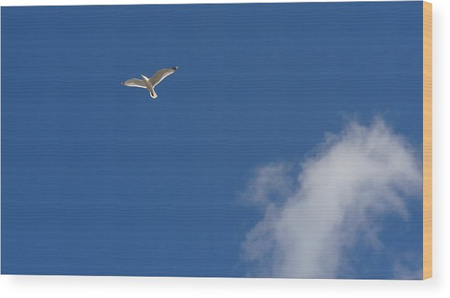 Seagull Wood Print featuring the photograph Seagull in the Sky by Jessica Cruz