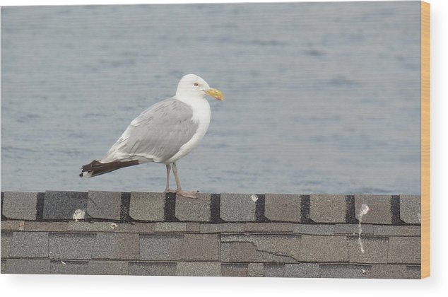 Seagull Wood Print featuring the photograph Taking in the View by Jessica Cruz
