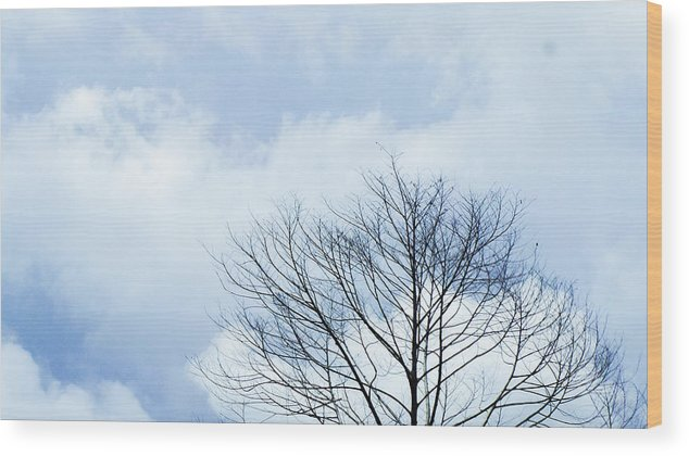 Winter Fall White Sky Wood Print featuring the photograph Winter Tree by Adelista J