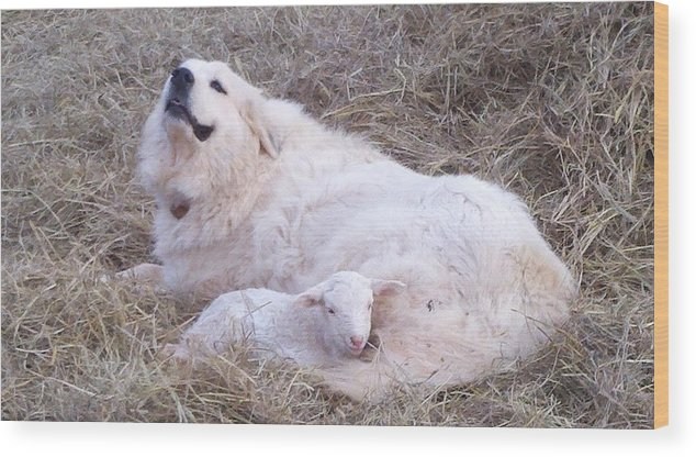 Great Pyrenees Dog Wood Print featuring the photograph Isabel and Molly 2 by Ginger Concepcion