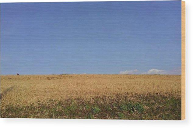 Sunnyday Wood Print featuring the photograph Sunnyday by Kumiko Izumi