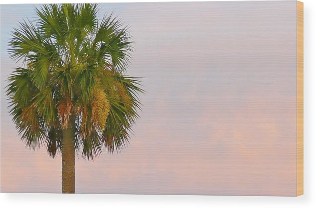 Palm Wood Print featuring the photograph Sunset Palm by Scott Waters