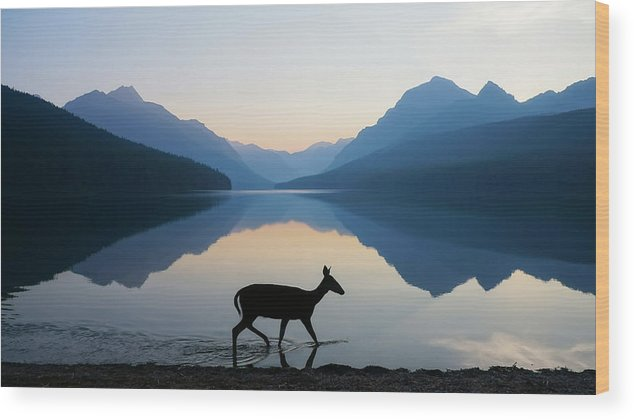 Glacier National Park Wood Print featuring the photograph The Grace of Wild Things by Dustin LeFevre