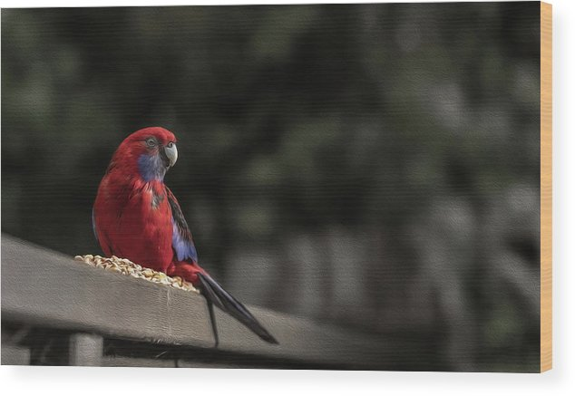 Rosella Wood Print featuring the photograph Rosella 1 by Leigh Henningham