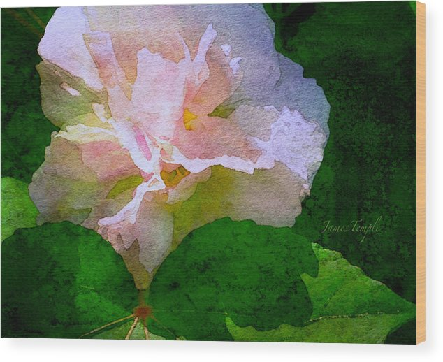 China Rose Wood Print featuring the digital art China Rose by James Temple