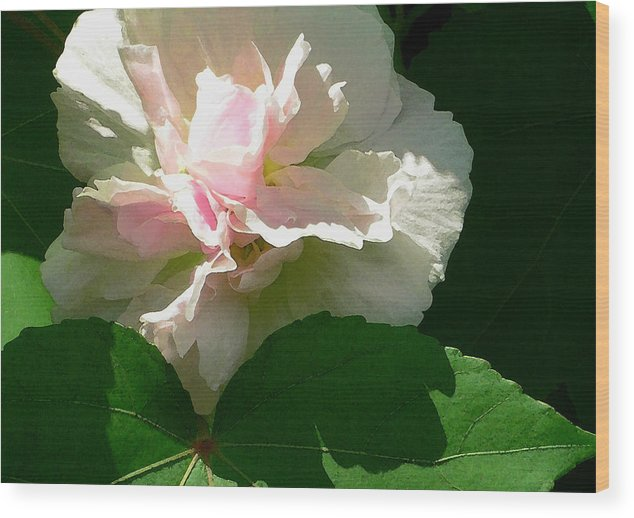 China Rose Wood Print featuring the photograph China Rose 1 by James Temple