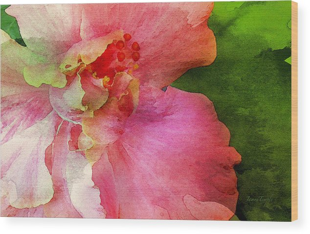 Pink Hibiscus Watercolor Wood Print featuring the digital art A Splash Of Color by James Temple
