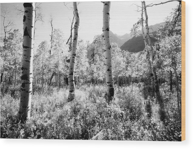 Landscape Wood Print featuring the photograph Aspens Black and White by Caroline Clark