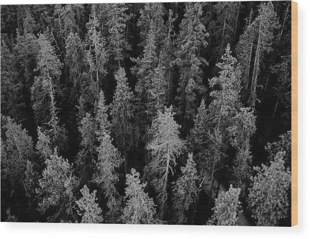 Forest Wood Print featuring the photograph Dark Forest by Caroline Clark