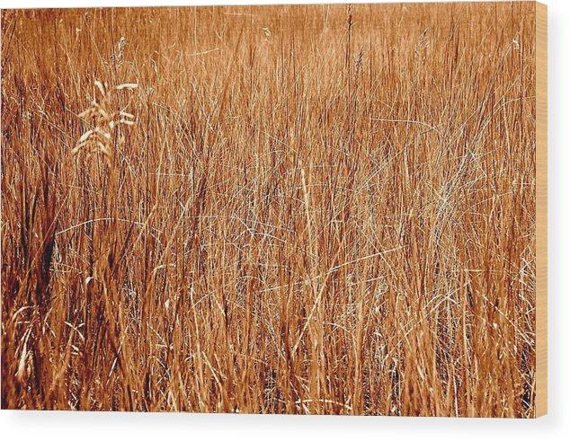 Field Wood Print featuring the photograph Golden Field by Caroline Clark