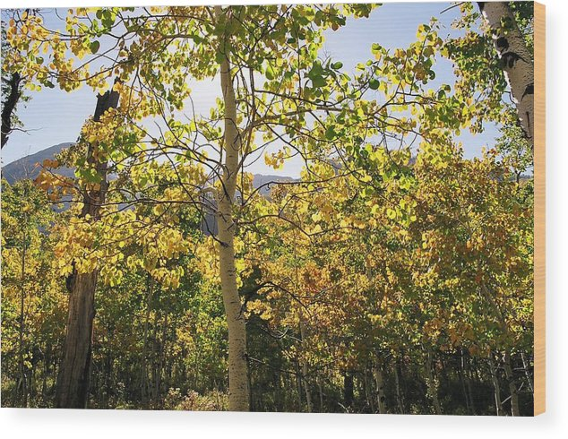 Landscape Wood Print featuring the photograph Light and Leaves by Caroline Clark