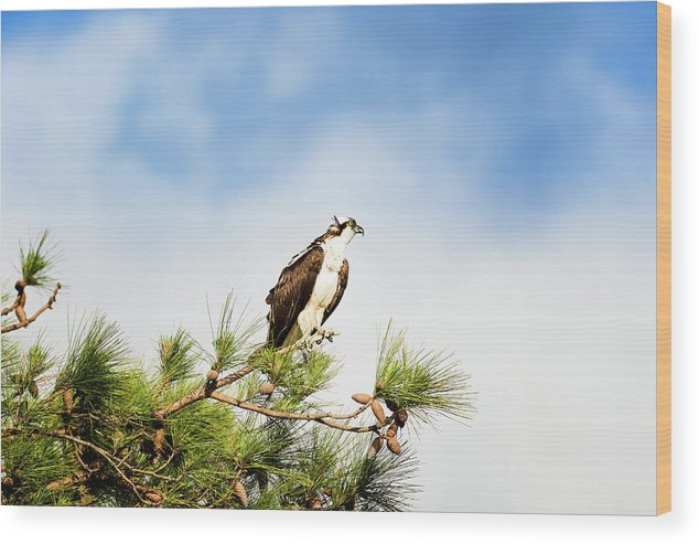Osprey Wood Print featuring the photograph On High by Michael McStamp