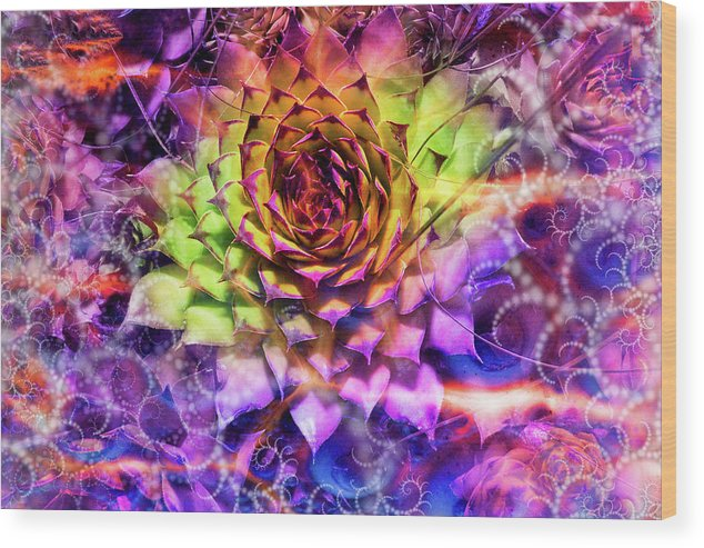 Colorful Wood Print featuring the photograph Shrouded Sempervivum by Dana Vallery