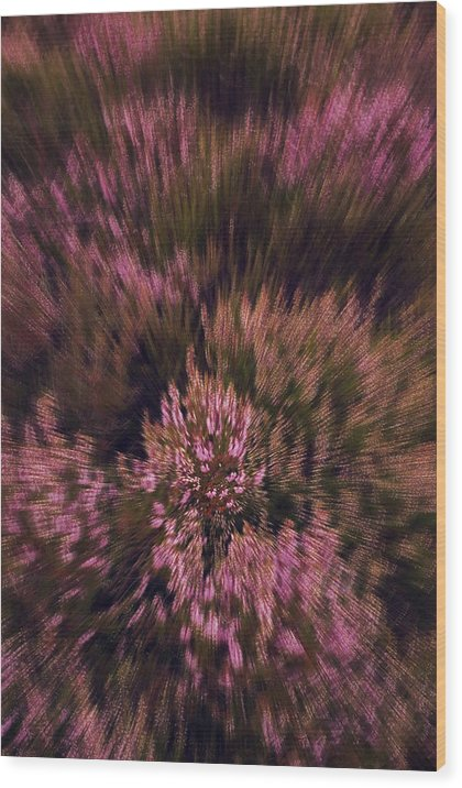 Denmark Wood Print featuring the photograph Color Explosion by Wedigo Ferchland