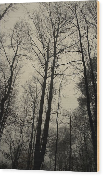Trees Wood Print featuring the photograph Standing Tall by Ayesha Lakes