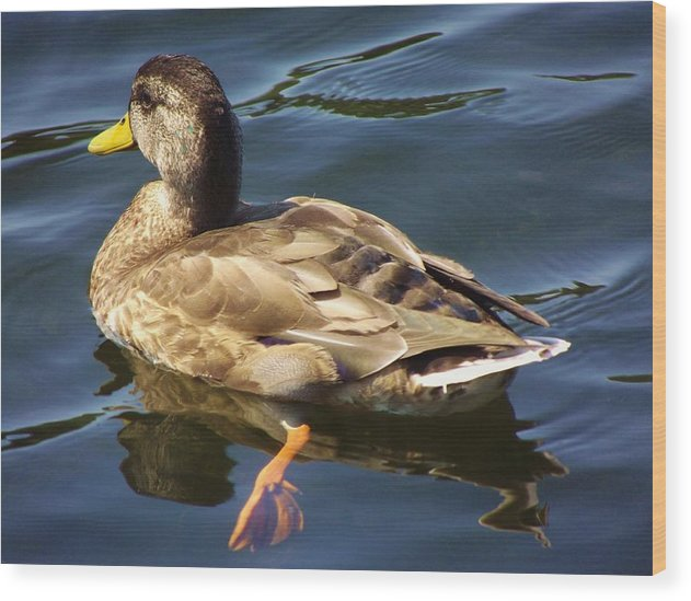 Duck Wood Print featuring the photograph Navigatinng The Pond by Lori-Anne Fay
