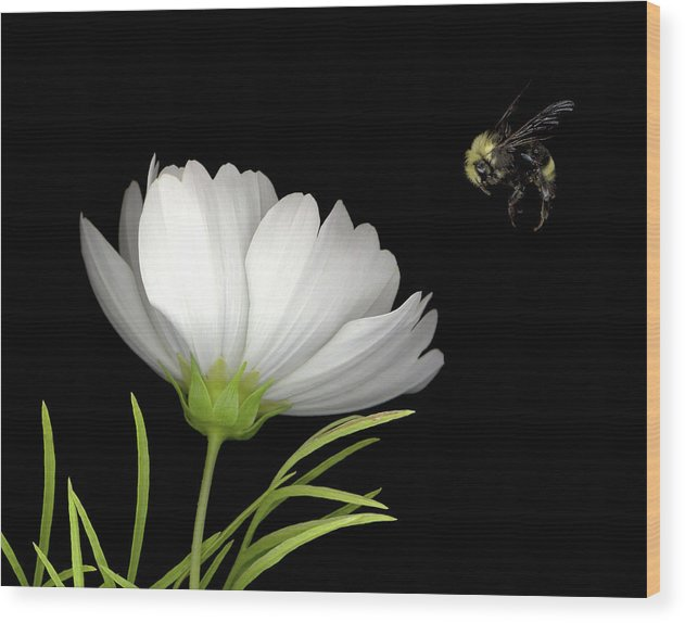 Cosmo Wood Print featuring the mixed media Cosmo And Bee by Sandi F Hutchins