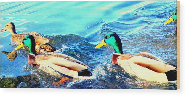 Swim Wood Print featuring the photograph Some Ducks Are Just Happily Swimming With Their Team by Hilde Widerberg