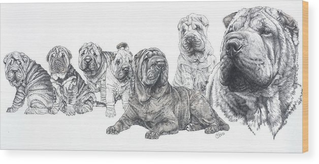 Non-sporting Group Wood Print featuring the drawing Growing Up Chinese Shar-pei by Barbara Keith