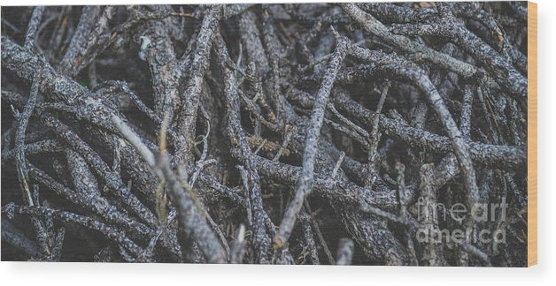 Wood Wood Print featuring the photograph Simplicity In Chaos by Janelle Bakey