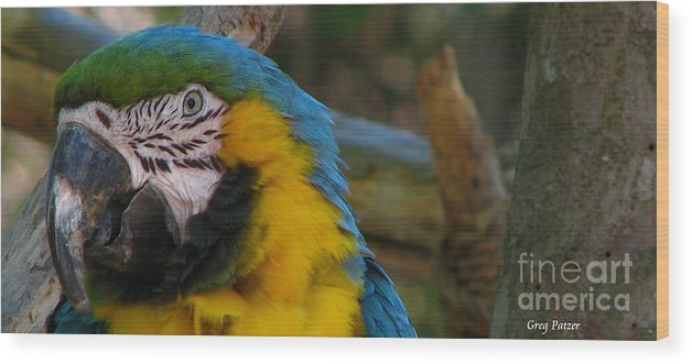 Patzer Wood Print featuring the photograph Blue And Gold by Greg Patzer
