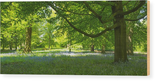Bluebells Wood Print featuring the photograph The Bluebell Wood by Moments In Time Photographics