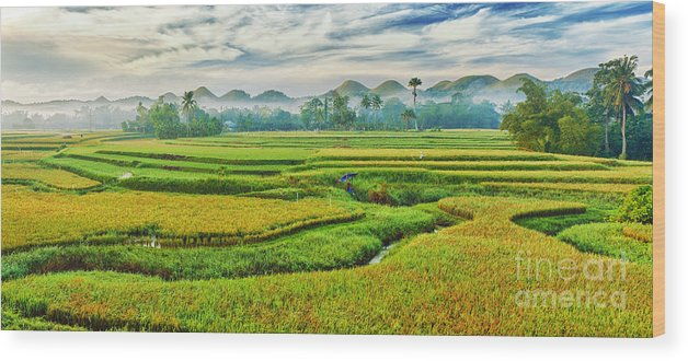 Paddy Wood Print featuring the photograph Paddy Rice Panorama by MotHaiBaPhoto Prints