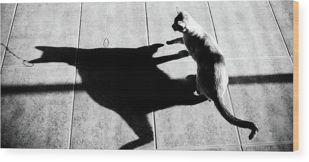 Cat Wood Print featuring the photograph Shadow Cat by Scott Sawyer