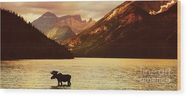 Waterton Wood Print featuring the photograph Moose In Lake With High Mountains In by Hdsidesign