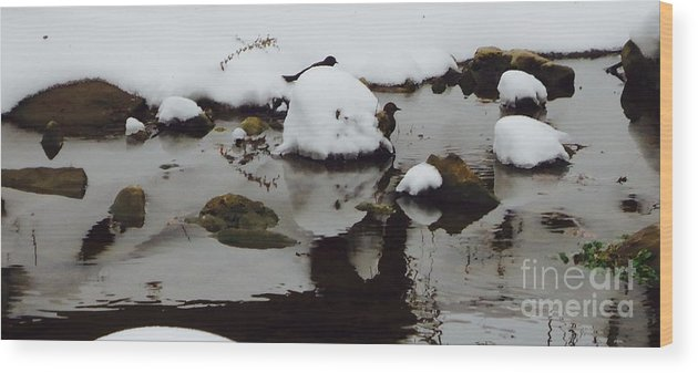 Winter Wood Print featuring the photograph Birds In Winter Water by Tashia Summers