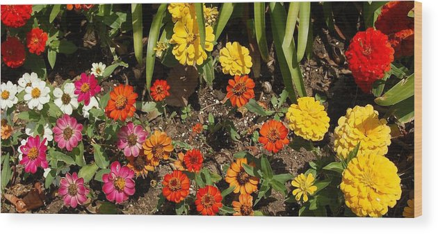 Linda Brody Wood Print featuring the photograph Flower Bed by Linda Brody