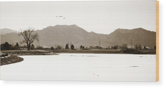 Harpers Wood Print featuring the photograph Harpers Lake Louisville Colorado by Marilyn Hunt