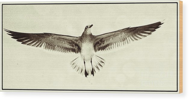 Beach Wood Print featuring the photograph The Perfect Wing by Jim Moore