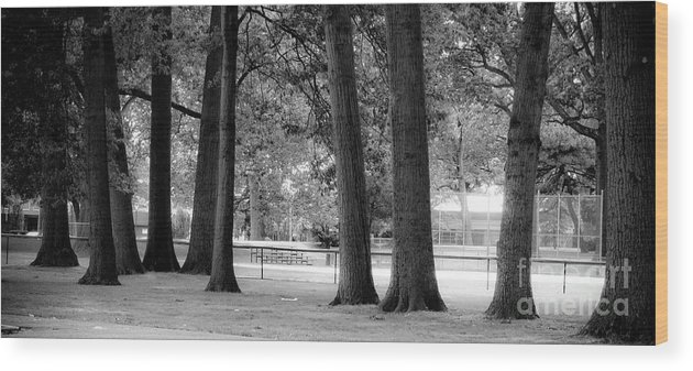 Trees Wood Print featuring the photograph Elephant Legs by Valerie Morrison