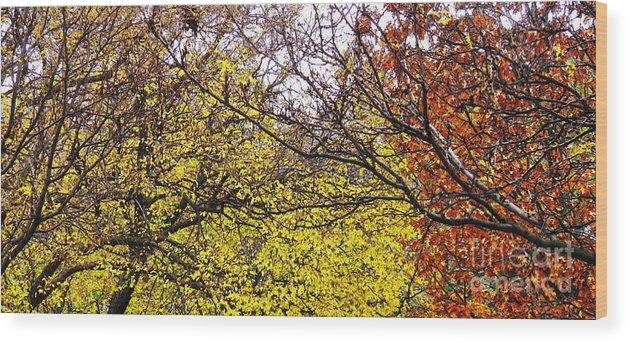 Autumn Panorama.sarah Loft Wood Print featuring the photograph Autumn Panorama by Sarah Loft