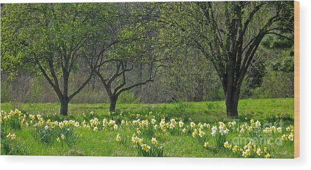 Spring Wood Print featuring the photograph Daffodil Meadow by Ann Horn