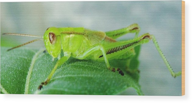Nature Wood Print featuring the photograph Insects by Marie-france Quesnel
